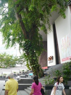 """艺术学院依树而建,让建筑与大自然和""""木""""相处。"""